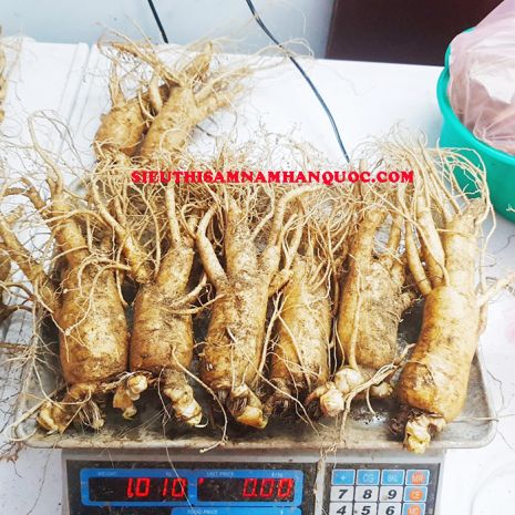 nhân sâm tươi Hàn Quốc loại 6 củ 1kg đều đẹp